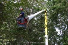 Bucket truck tree removal, pruning and chipping on Bank Street in Harwich Port.